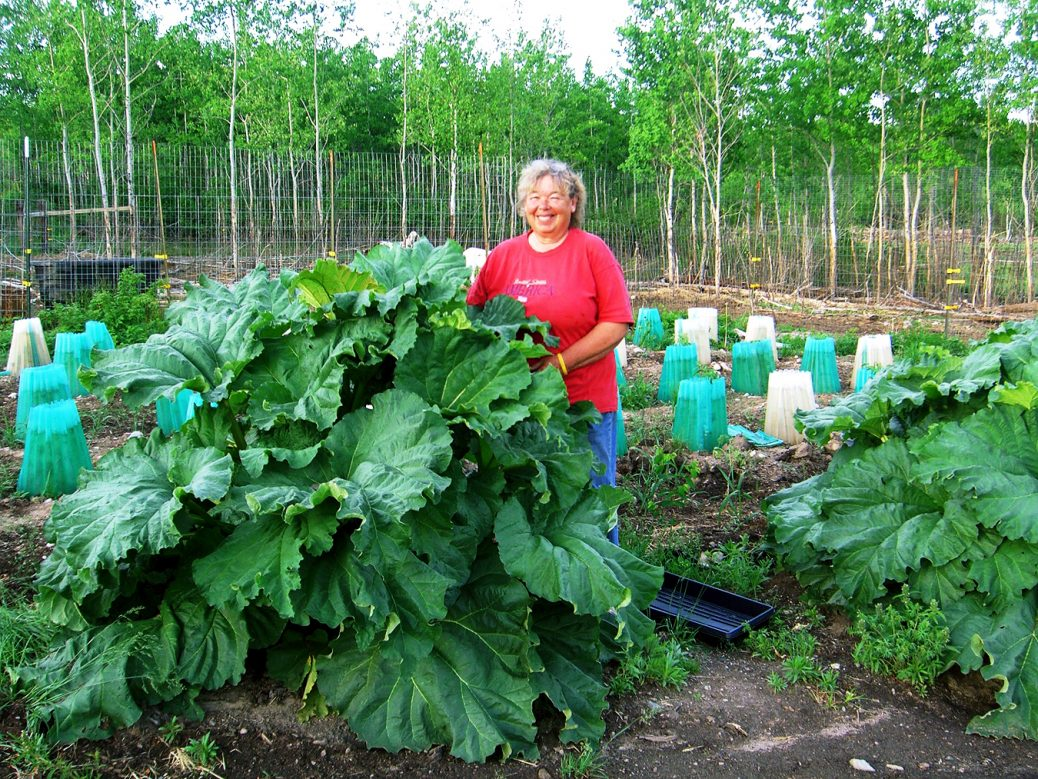 How to plant rhubarb in the fall -  Jackie And Rhubarb 002 2
