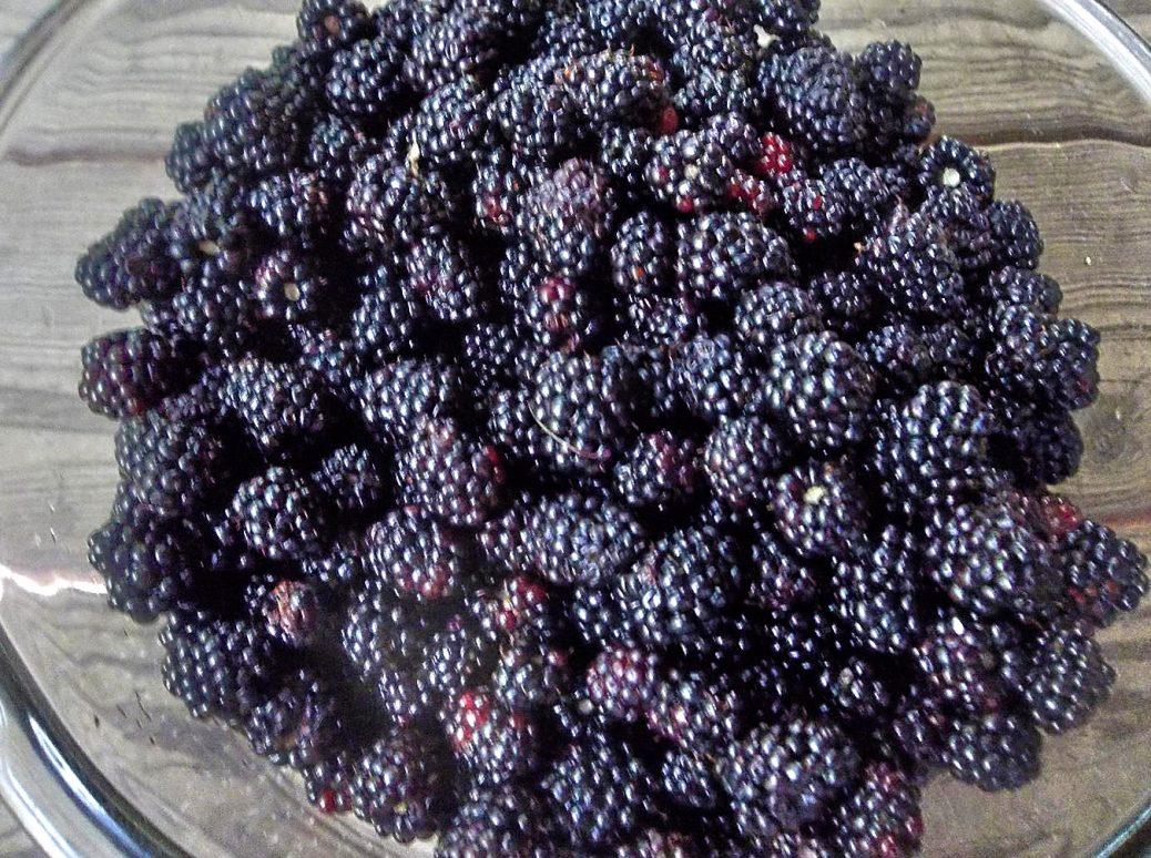 fruit blak berri