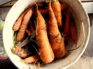 Clay_Carrots_Parsnips_02