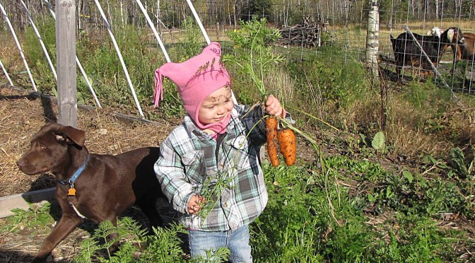 Growing carrots and parsnips