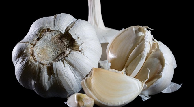 Garlic — an antibiotic you can grow in your garden