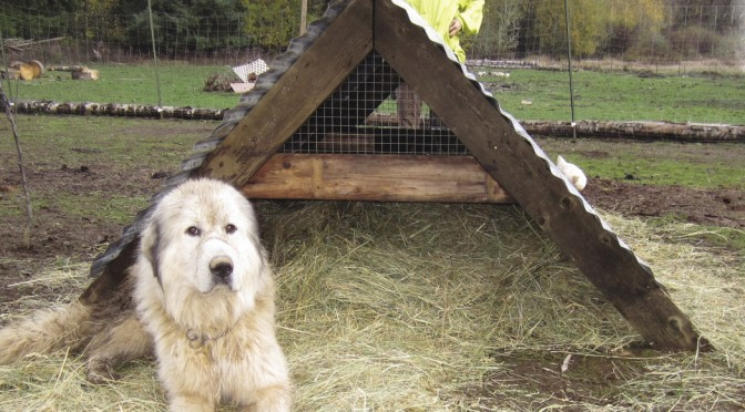 A-frame huts for small animals