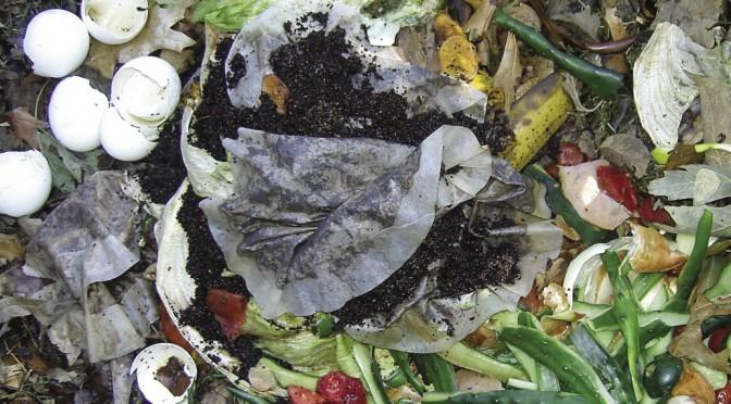Melon pits,  sheet composting,  and compost tea