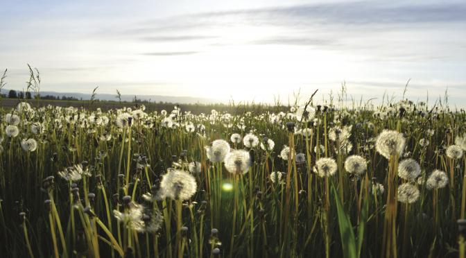Rethinking the weeds