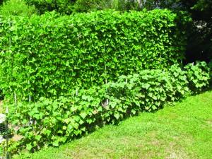 Crouch_Garden tips_01