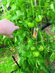 Crouch_Garden tips_05
