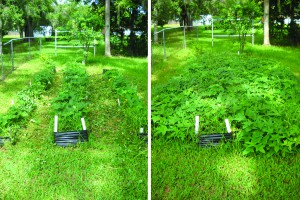 Crouch_Garden tips_06-redone