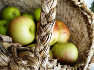 Windfall apples are perfect for making jelly
