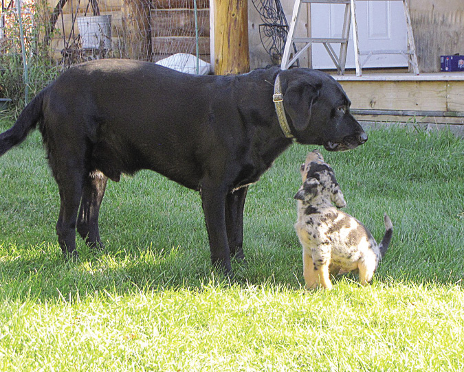 clay_dogs_6392_opt